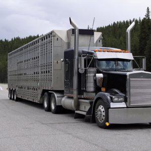 Transport zwierząt – co trzeba wiedzieć?